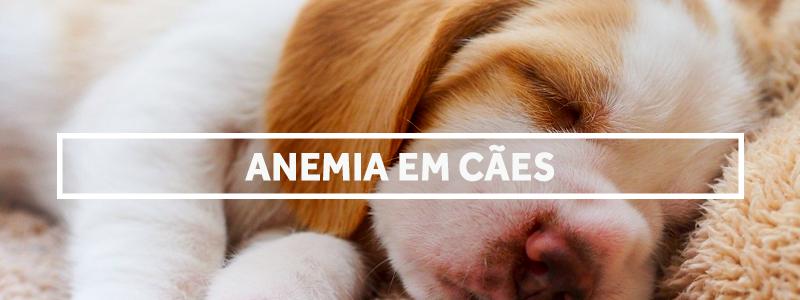 anemiaemcaes-blog