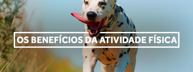 atividadefisica-blog