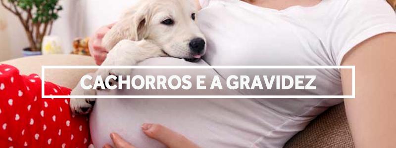 cachorrosgravidez-blog