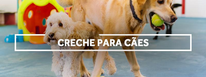 crechecaes-blog