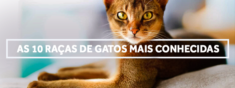 gatos-blog