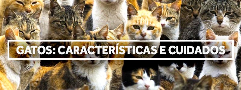 gatoscuidados-blog