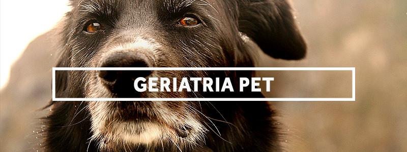 geriatriapet-blog