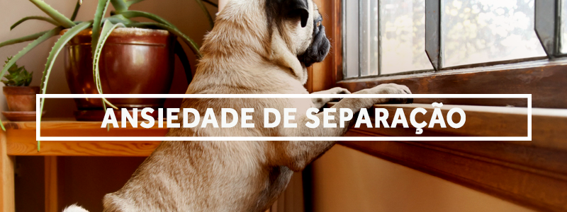separacao-blog