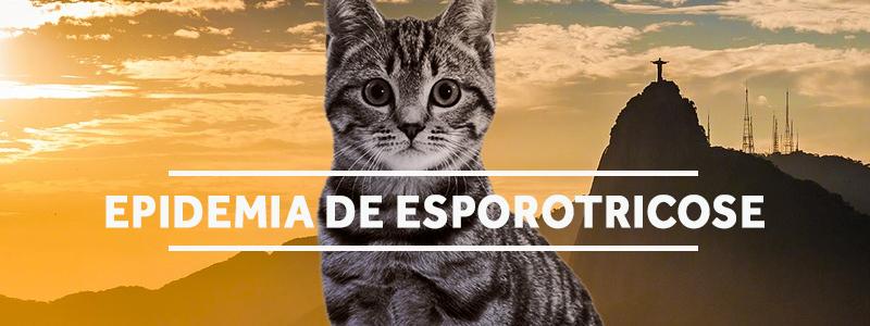 esporotricose-blog