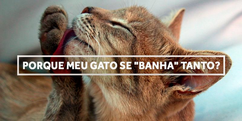 gatobanho-blog