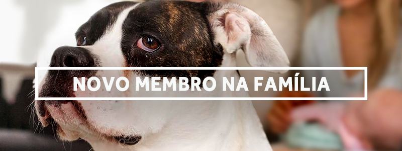 novomembro-blog