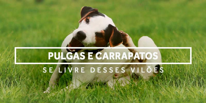 pulgasecarrapatos-blog