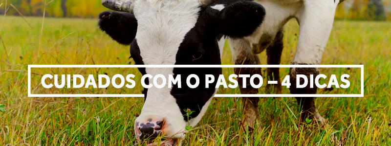4cuidadoscompasto-blog