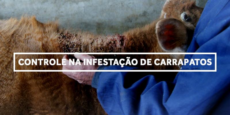 carrapato-blog