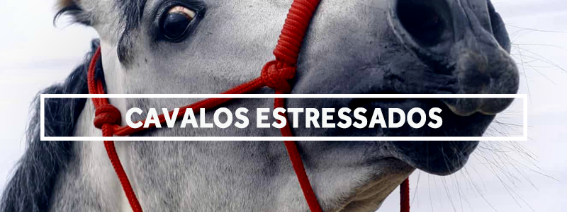 cavalosestressados-blog