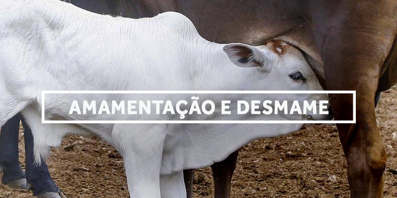 desmame-blog