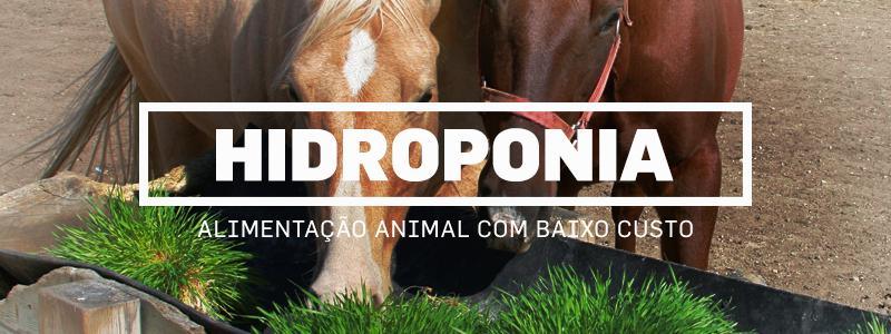 hidroponia-blog1