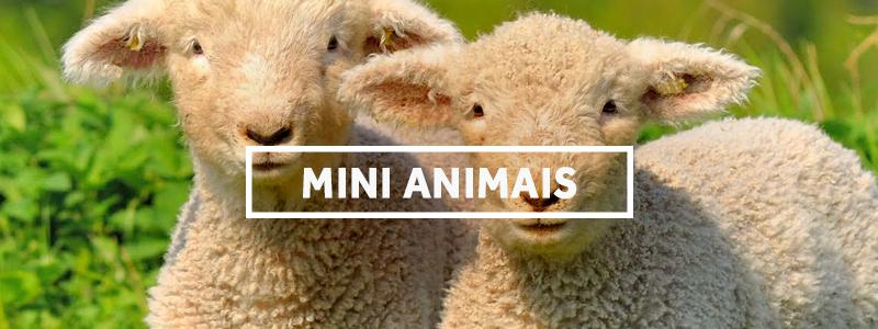minianimais-blog