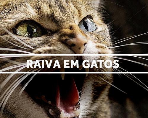 raivagatos-blog