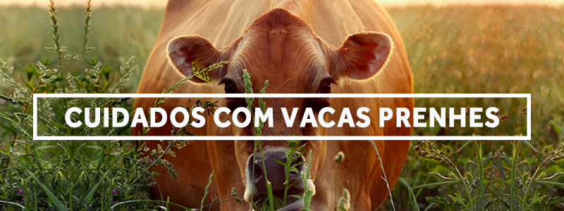 vacaprenhe-blog