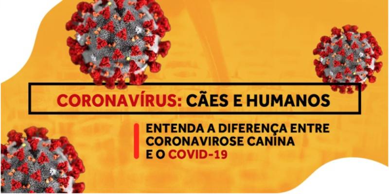 Coronavirus cães e humanos