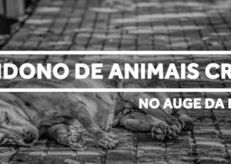 Abandono de Animais Cresce Pandemia