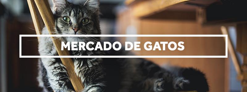Mercado de Gatos