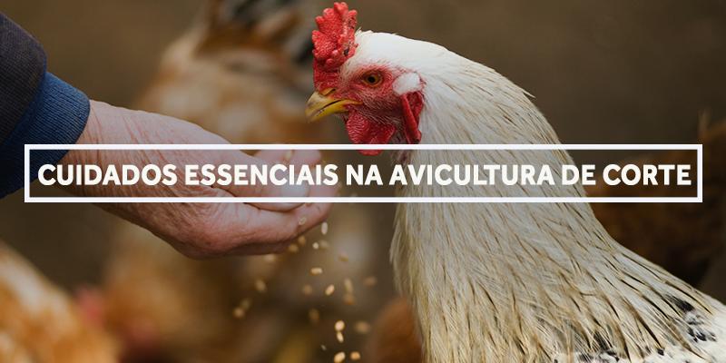 capa avicultura