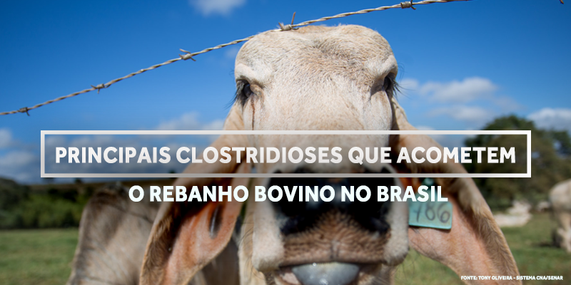 capa clostridioses blog